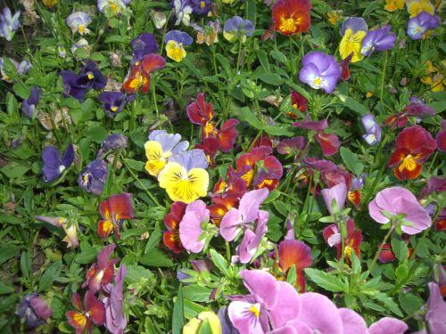 Blumenbilder kostenlos gratis blumen fotos
